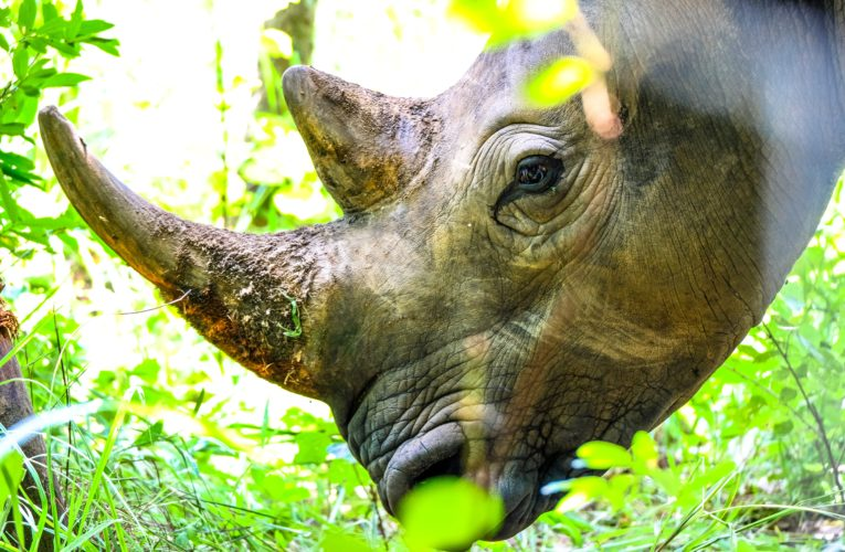 Some Babies are Rhinos