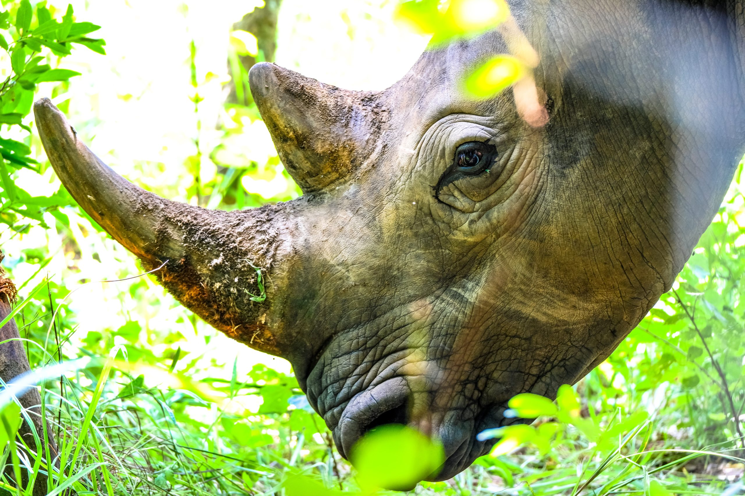 rhino Photo by Francesco Ungaro from Pexels