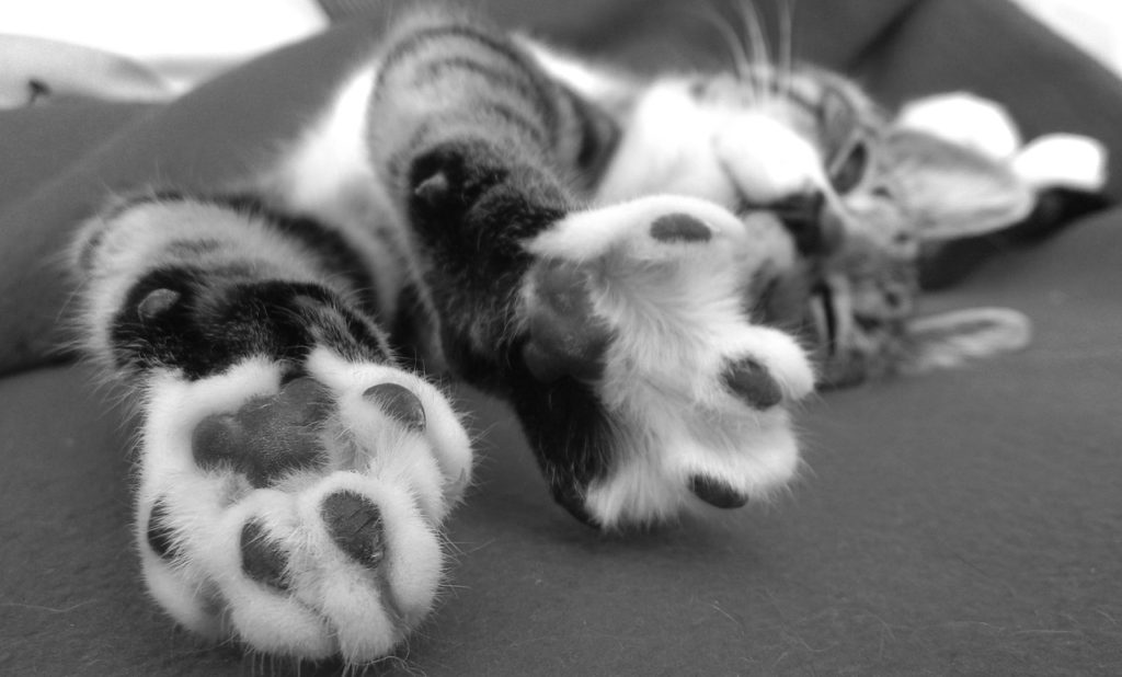 Cat paws so cute.