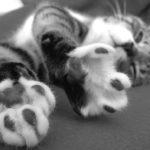 Cat paws so cute.