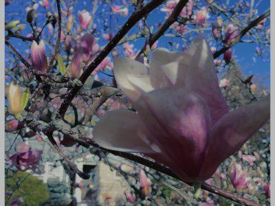 Neon Flower Petals
