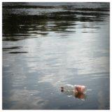 plastic bottle floating on lake litter everyday compassion